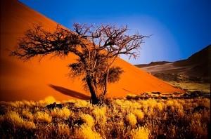 namibia-africa-300x198